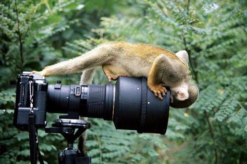 бесплатно фото животных
