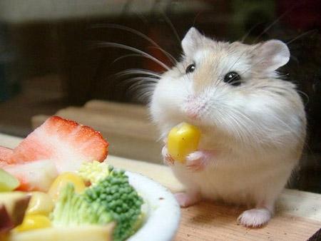 смешные фотографии животных